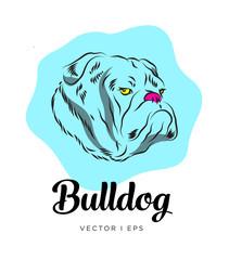 Vector editable colorful sketch depicting an English bulldog dog head.