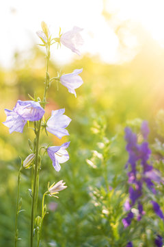 Flower in a spring garden at sunrise