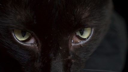 close-up green eyes of a black cat. unhealthy eyes