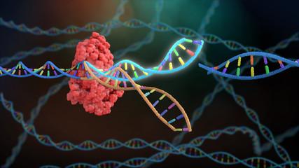 Crispr DNA Editor Wall mural