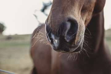Close-up of horse's snout at farm