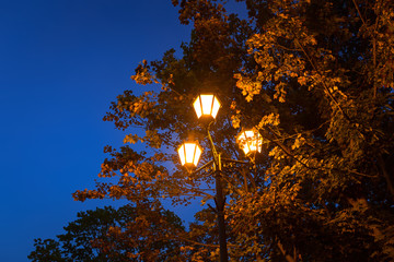 Autumnal scenery in the park at dusk