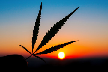 Silhouette of hand holding cannabis leaf at sunrise. Marijuana leaves on background of the sunset sky with sunlight