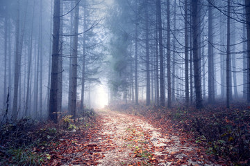 Foggy autumn season forest road.