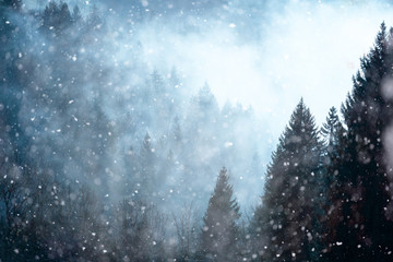Snowfall in foggy and cloudy forest landscape.