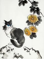 cat on stone and chrysanthemum flower