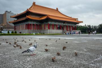 Pigeon at the Kai-Shek Memorial Hall in Taipei, Taiwan.