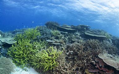Pristine coral reef in Australia