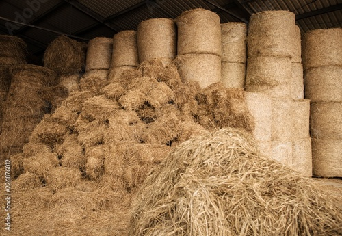 Wall mural Stored Hay For Animals