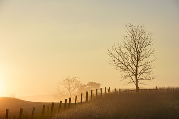 Fototapete - Tree and Fence on Foggy Autumn Morning