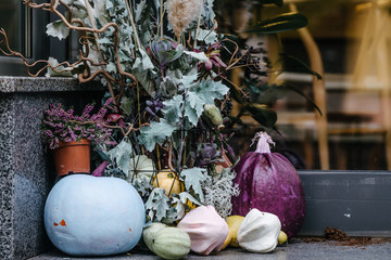 Stylish and elegant fall farmhouse decor ideas. Blue and purple colored pumpkins, dry oak leaves. Minimalism artful concept