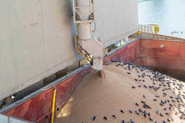 Еlevator crane loads ship holds bulk with wheat. Birds in bulk hold during grain loading. Whelp Bargain Hold. Grain elevator. Filling hold. Wheat in bulk