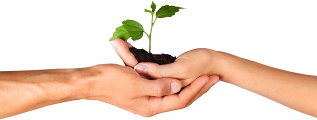 Poster Planten Hands Holding a Young Plant
