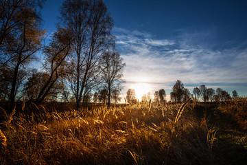 Autumn landscape. Western Siberia, Russia