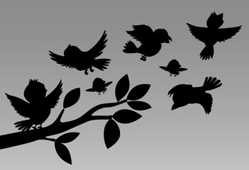 Silhouette design of birds