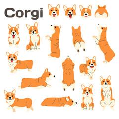 corgi,dog in action,happy dog