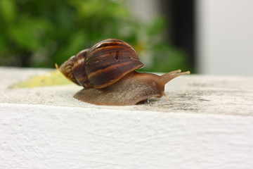 snail clawing on the wall