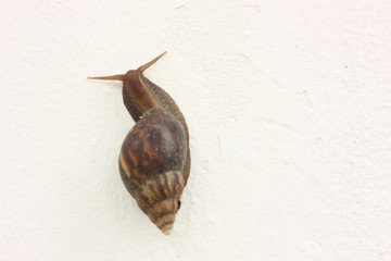 snail on the white wall