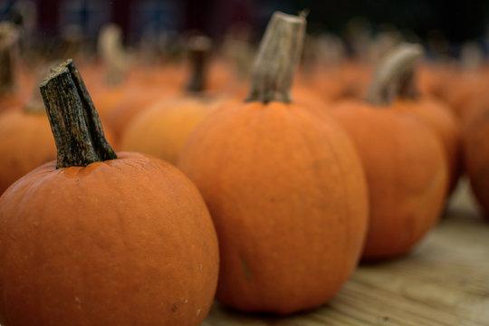 small pumpkin harvest
