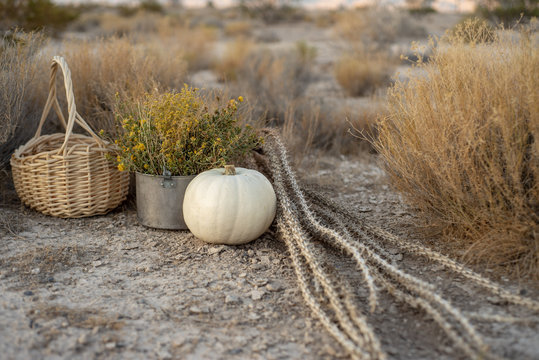 white pumpkin, woven basket, desert wildflowers, dried plants in Mojave desert landsape