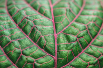 macro photo green leaf