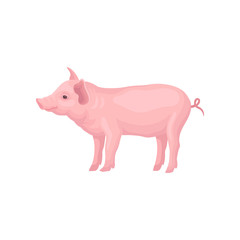Vector icon of stranding pig isolated on white background. Farm animal with hooves, pink skin, swirling tail, big ears and flat snout