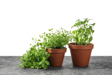 Pots with fresh aromatic herbs on grey table against white background