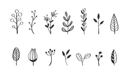 Herbal tea and floral doodle set. Vector 5