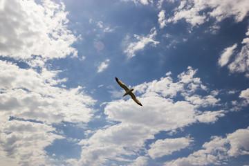A seagull bird in the cloudy blue sky