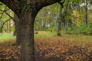 autumn park with a tree trunk in the foreground
