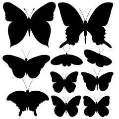isolated butterfly silhouette