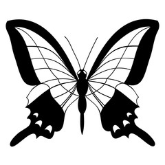 black and white butterfly silhouette