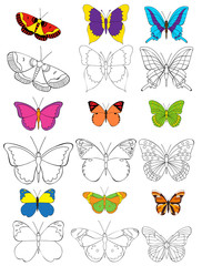 vector, isolated, colorful butterfly, coloring book
