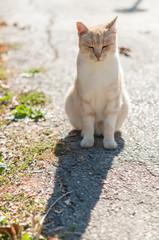 ginger cat in street