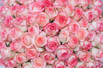 rose, pink, flower, bouquet, roses, flowers, love, nature, wedding, isolated, white, bunch, gift, valentine, floral, beautiful, petal, beauty, blossom, red, romance, anniversary, birthday, romantic, g