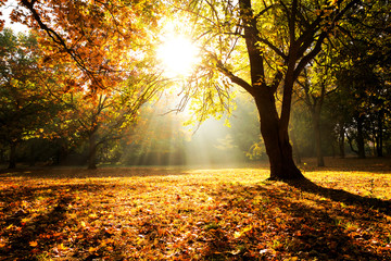 Sunlight through Trees, Meadow in City Park Berlin, autumn forest