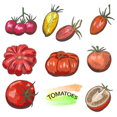 Hand drawn colored tomatoes set isolated on white background.