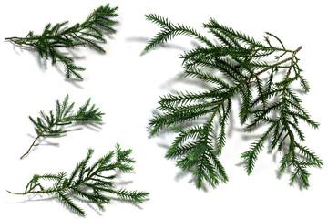 Christmas tree leaves