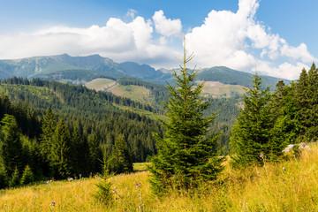 nice meadow in Low tatras