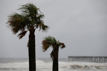 Palm trees are seen as Hurricane Michael approaches Panama City Beach