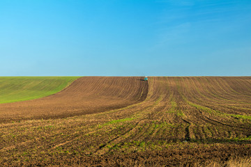 Winter wheat field in the fall with a tractor