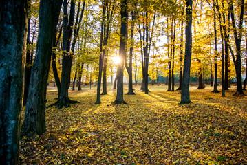 Bright sun rays in autumn park. Beautiful landscape in autumn park.