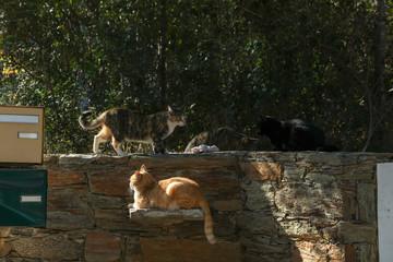 Katzen auf Korsika
