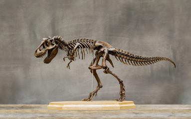 Fossil skeleton of Dinosaur king Tyrannosaurus Rex ( t-rex ) on wooden base and blackboard background.