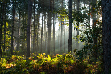 An English woodland in Autumn sunlight