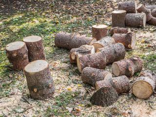 Gehölzschnitt Baumfällung