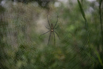 Close up spider in nature.