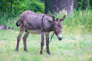 Photo sur Plexiglas Ane Grey cute baby donkey and mother on floral meadow