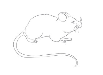 mouse stands drawing by lines, vector,