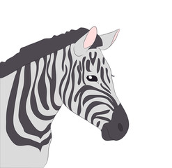 portrait of zebra drawing color, vector